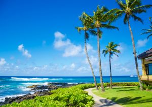 s-Palm-Trees-By-The-Ocean-47363494